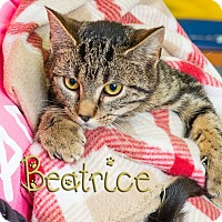 Adopt A Pet :: Beatrice - Somerset, PA
