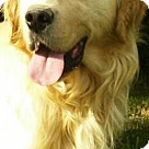Adopt A Pet :: Clay