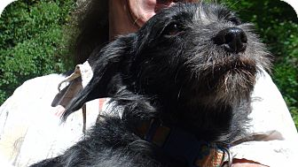 Terrier (Unknown Type, Small) Mix Dog for adoption in Grass Valley, California - Nari