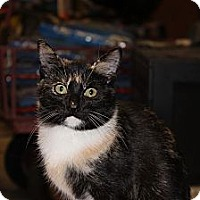Adopt A Pet :: Snickers - Maxwelton, WV