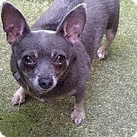 Adopt A Pet :: Sara - Lincolnwood, IL