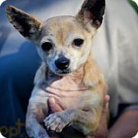 Adopt A Pet :: Hobbie - South Amboy, NJ