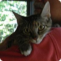 Adopt A Pet :: Blossom - Troy, OH