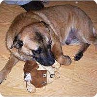 Adopt A Pet :: Scrappy - Allentown, PA