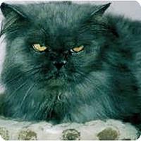 Adopt A Pet :: Matilda - Medway, MA