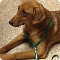 Adopt A Pet :: Copper - Covington, KY
