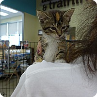 Adopt A Pet :: Tara - Lighthouse Point, FL
