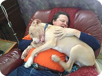 Great Dane/Hound (Unknown Type) Mix Dog for adoption in Phoenix, Arizona - Thai