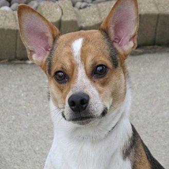 Beagle Mix Dog for adoption in Elizabethtown, Pennsylvania - Poppy