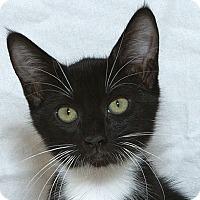 Adopt A Pet :: Lizzie M - Sacramento, CA