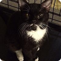 Adopt A Pet :: Barnes - Byron Center, MI