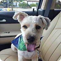 Adopt A Pet :: Tanner - Algonquin, IL