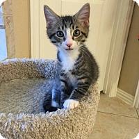 Adopt A Pet :: Carrington - Dallas, TX