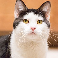 Adopt A Pet :: Dave - Chicago, IL