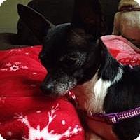 Adopt A Pet :: Bitsy - Ashville, OH