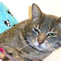 Adopt A Pet :: Layla - Wildomar, CA