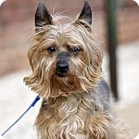 Adopt A Pet :: Reece - Richmond, VA
