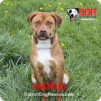 Adopt A Pet :: Waffles - St. Clair Shores, MI