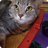 Adopt A Pet :: Freckles - Salisbury, MA
