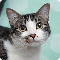 Adopt A Pet :: Abbie - Chippewa Falls, WI