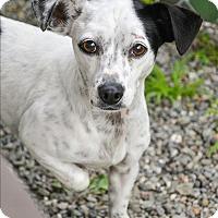 Adopt A Pet :: Penny - Vallejo, CA