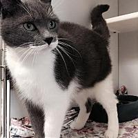Adopt A Pet :: Sara Bareilles - Richboro, PA