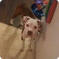 Adopt A Pet :: Jamie - Bardonia, NY
