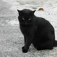 Adopt A Pet :: Serena - Naples, FL