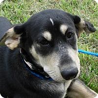 Adopt A Pet :: Gail - Erwin, TN