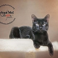 Adopt A Pet :: Tiki - Belton, MO