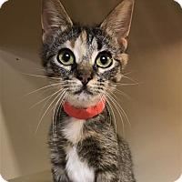 Adopt A Pet :: Daffodil 2 - Fairfax Station, VA