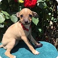 Adopt A Pet :: STACI - Elk Grove, CA