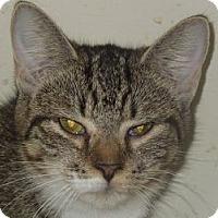 Adopt A Pet :: Leisha - Jacksonville, NC