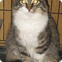 Adopt A Pet :: Little Lady - Dallas, TX
