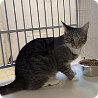 Adopt A Pet :: Leda - Winter Haven, FL