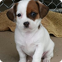 Adopt A Pet :: Hope - Scottsdale, AZ