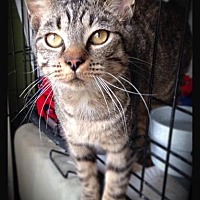 Adopt A Pet :: Handsome Rob - Hartford City, IN
