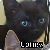 Adopt A Pet :: Gomez - Trevose, PA