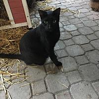 Adopt A Pet :: Al - Lauderhill, FL