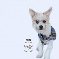 Adopt A Pet :: Max - Castaic, CA