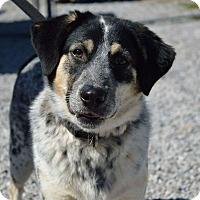 Adopt A Pet :: QUINCY - Rockwood, TN