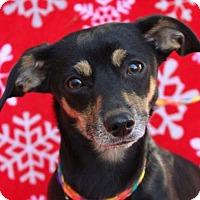 Adopt A Pet :: DARCIE - Red Bluff, CA