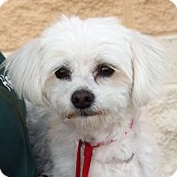 Adopt A Pet :: Pancho - Palmdale, CA