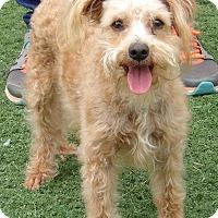 Adopt A Pet :: Murphy (11 lb) Sweetest Boy - Williamsport, MD