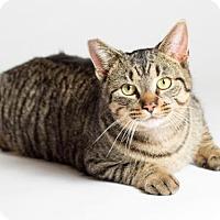 Adopt A Pet :: Cincher - Kingston, ON