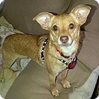 Adopt A Pet :: Kitty - South Amboy, NJ