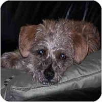 Adopt A Pet :: Andy - Phoenix, AZ