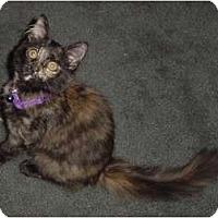 Adopt A Pet :: Katrina - Franklin, NC