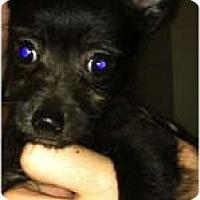 Adopt A Pet :: Aiko - Oceanside, CA