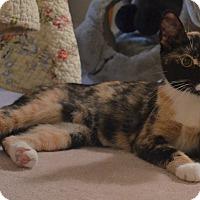 Adopt A Pet :: Meadow - Horsham, PA